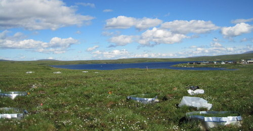 One science plot, with Toolik Lake in the distance. Photo: Nell Kempk