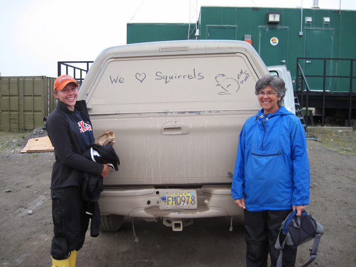 Catching arctic ground squirrels keeps Loren Buck's Team Squirrel busy much of the summer, but there's always time for a bit of fun! Here Kate Wilsterman (left) and Jeannette Moore (right) pose for a quick photo before leaving the laboratory at Toolik Field Station to head to Atigun (about 20 miles south of Toolik Field Station) to catch ground squirrels. Photo: Alicia Gillean