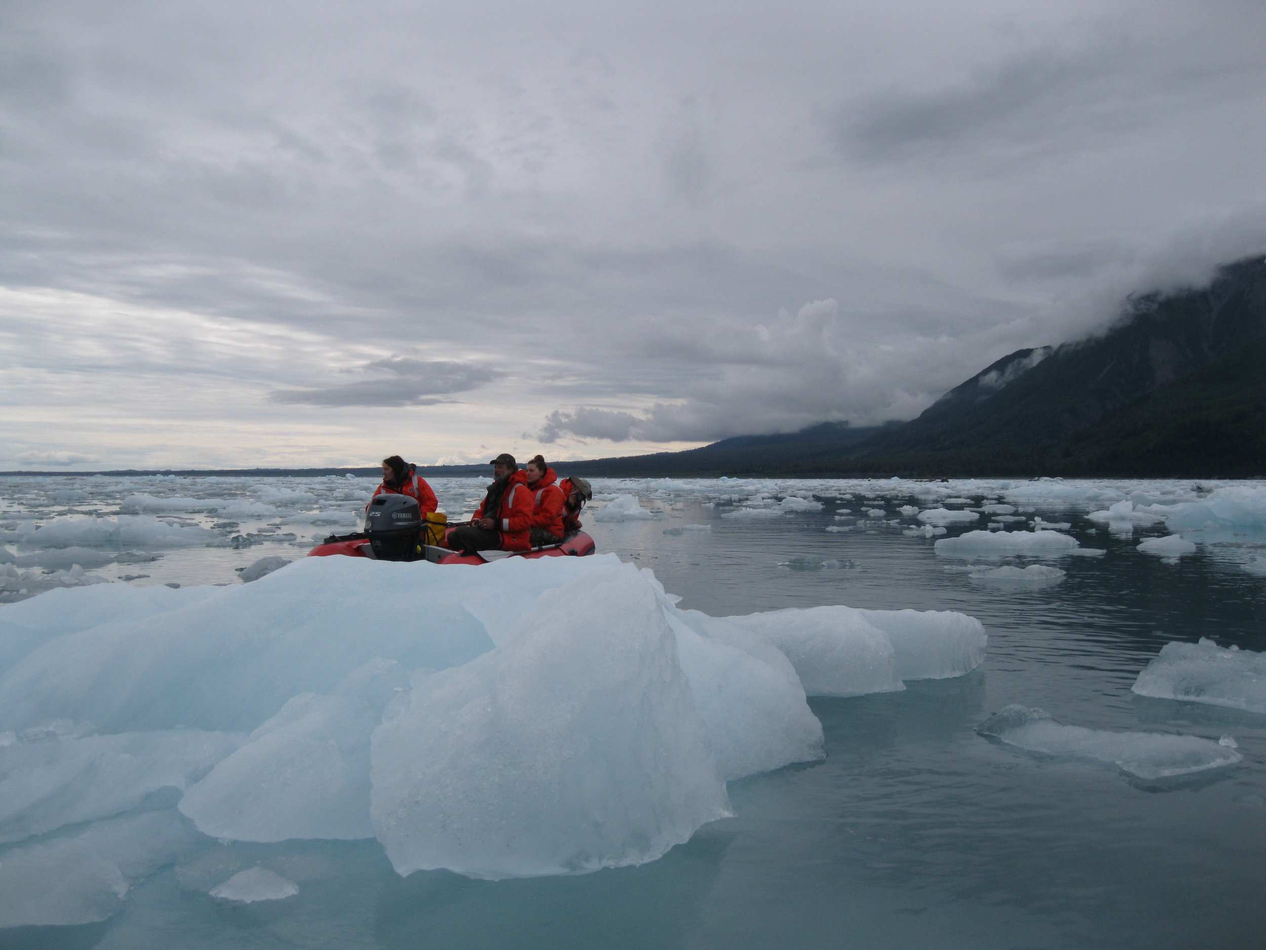 r. Aron Crowell and students watch for harbor seals on a visit to the ice floe rookery near Hubbard Glacier. Photo: Darian LaTocha