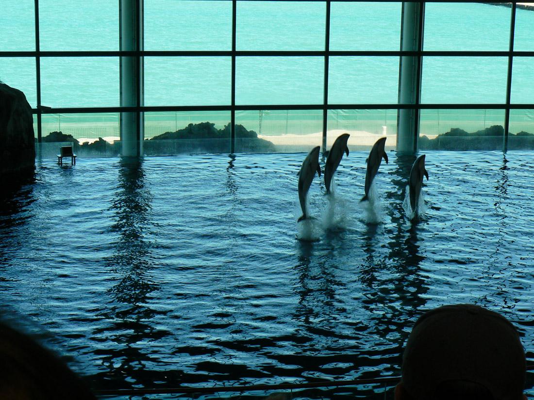 Shedd dolphins.jpg