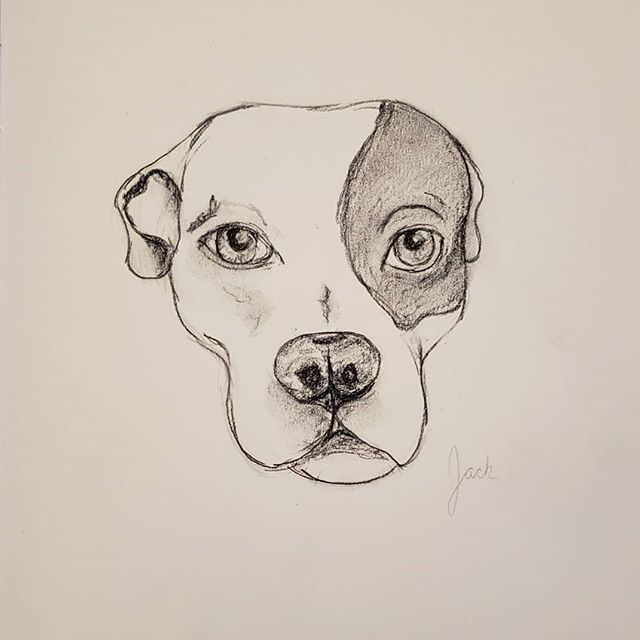 For #NationDogDay I bring a super quick charcoal sketch of my little love and middle dog, Jack. He has my whole heart. . . He also likes to be close to me at all times, so here he is, checking my work. 💖🐾🐶 . . #adoptdontshop #spayandneuter #dontbullymybreed #pibblesofinstagram #endbsl #whorescuedwho #foster