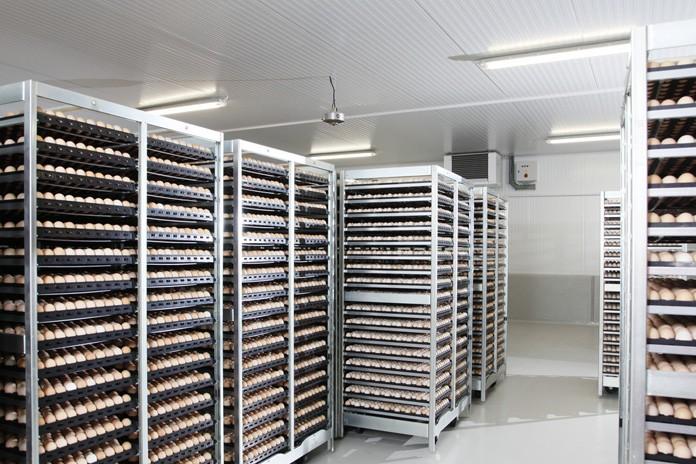 Egg incubators at a hatchery