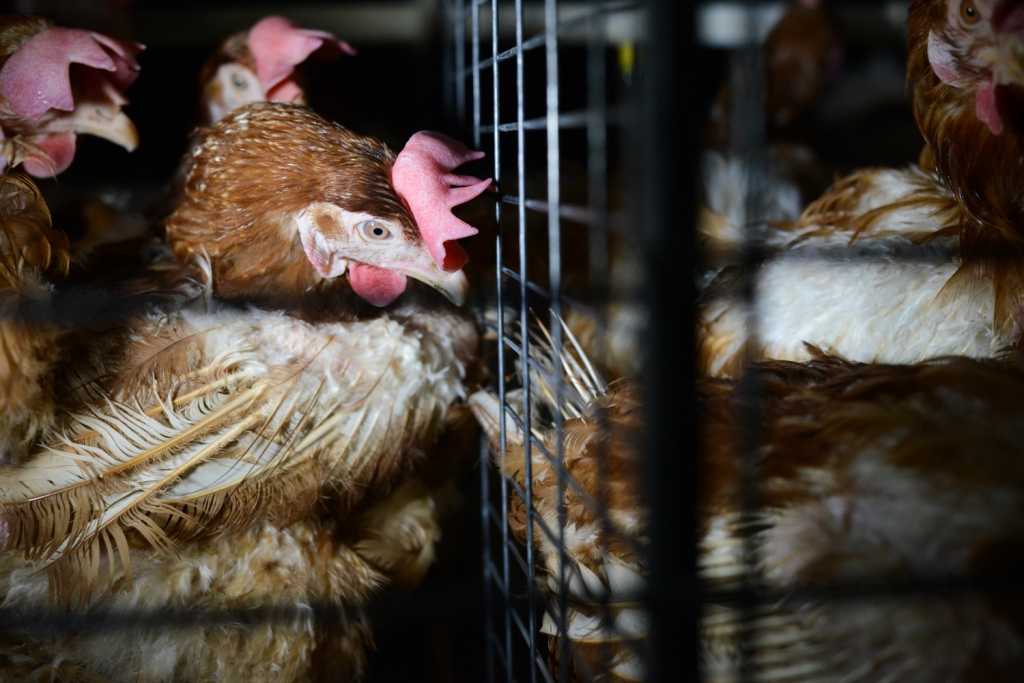 Photo credit: Jo-Anne McArthur/We Animals