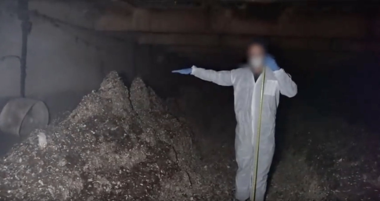 Image shows accumulated manure in pits are approximately five to six feet high.