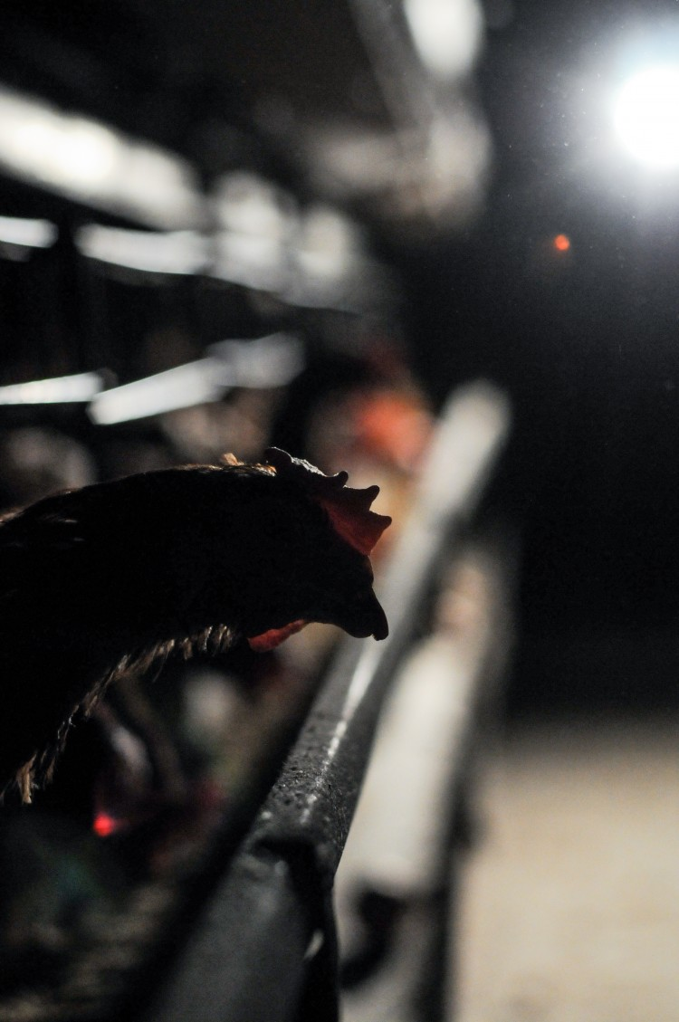 Photo: Jo-Anne McArthur/We Animals