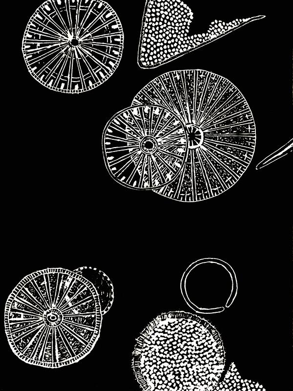 Diatom Wheels