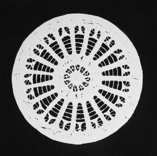 White Diatom