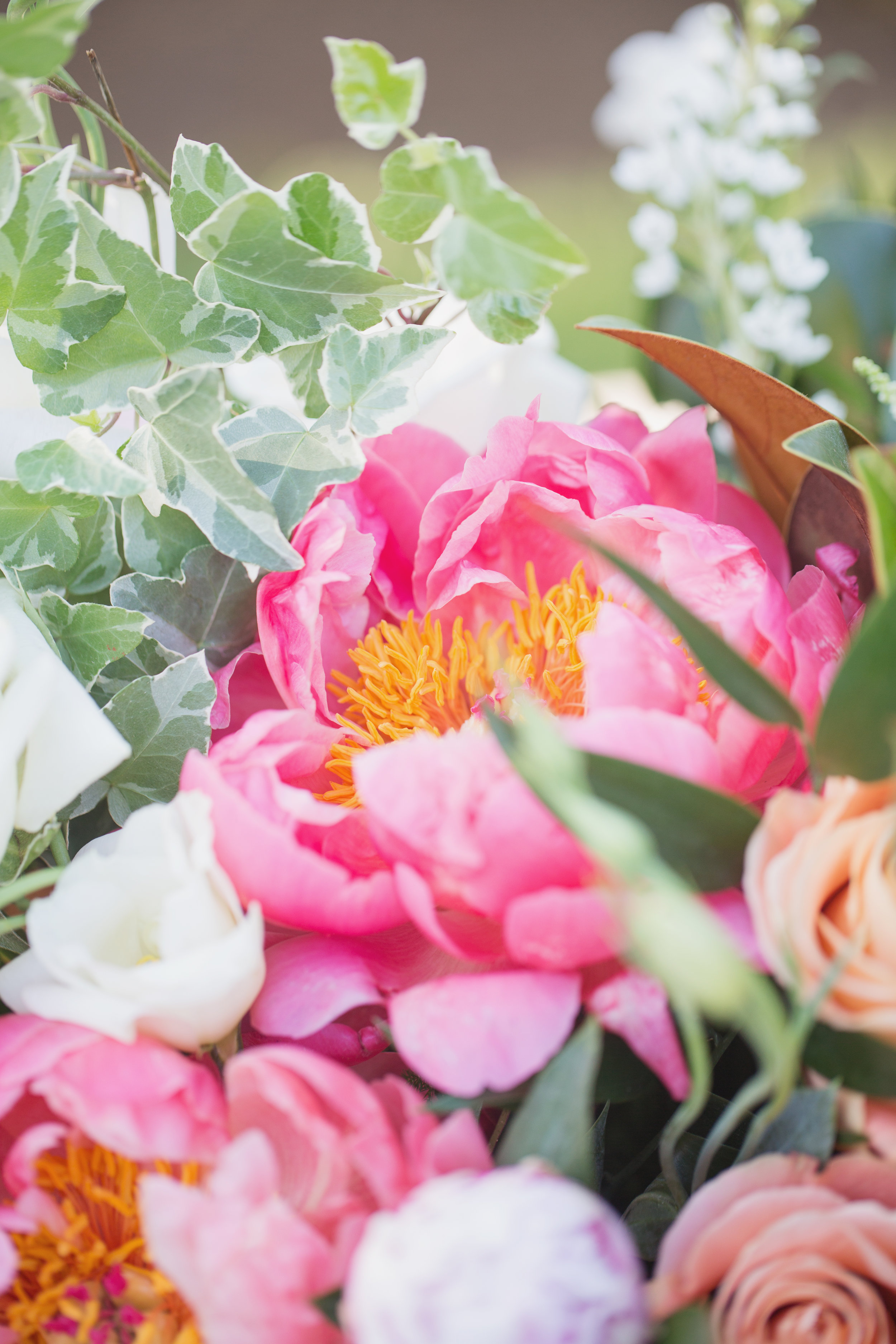 magnolia_028.jpg