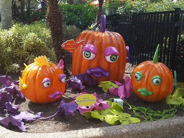 SeaWorld's Halloween Spooktacular   runs through October 29th on the weekends. Fun for the entire family!