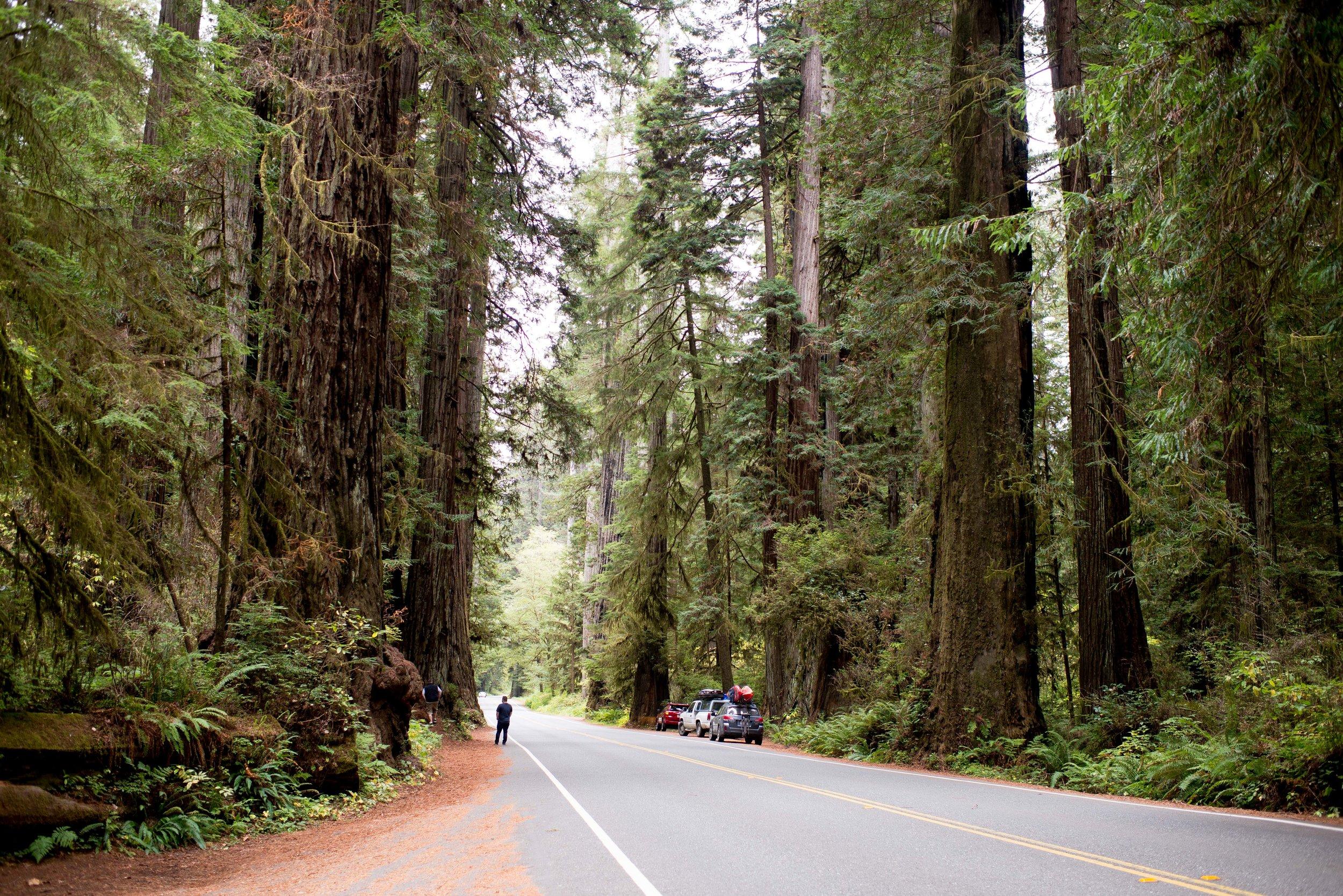 Redwood National  State Parks CA
