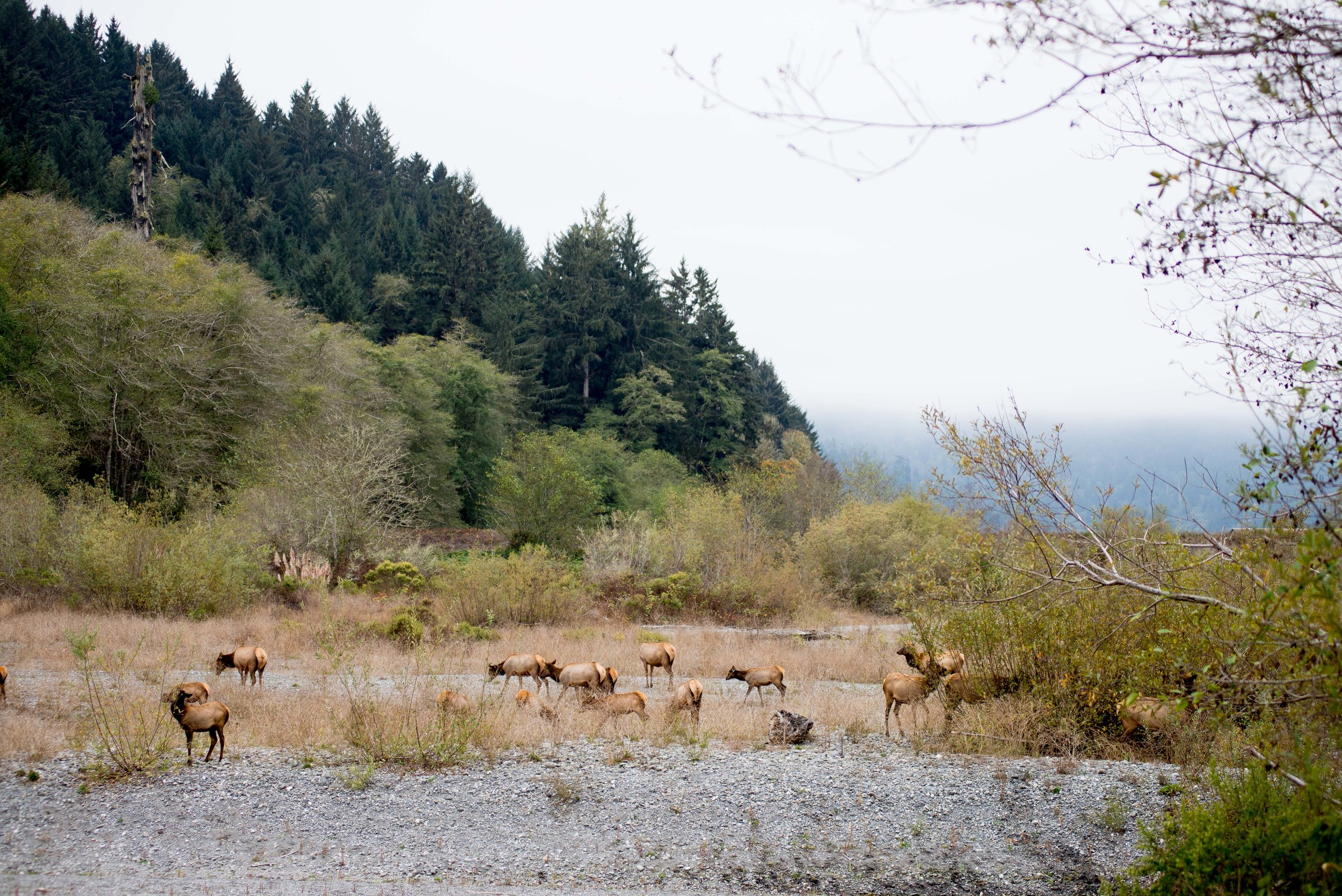 Redwood National & State Parks, CA