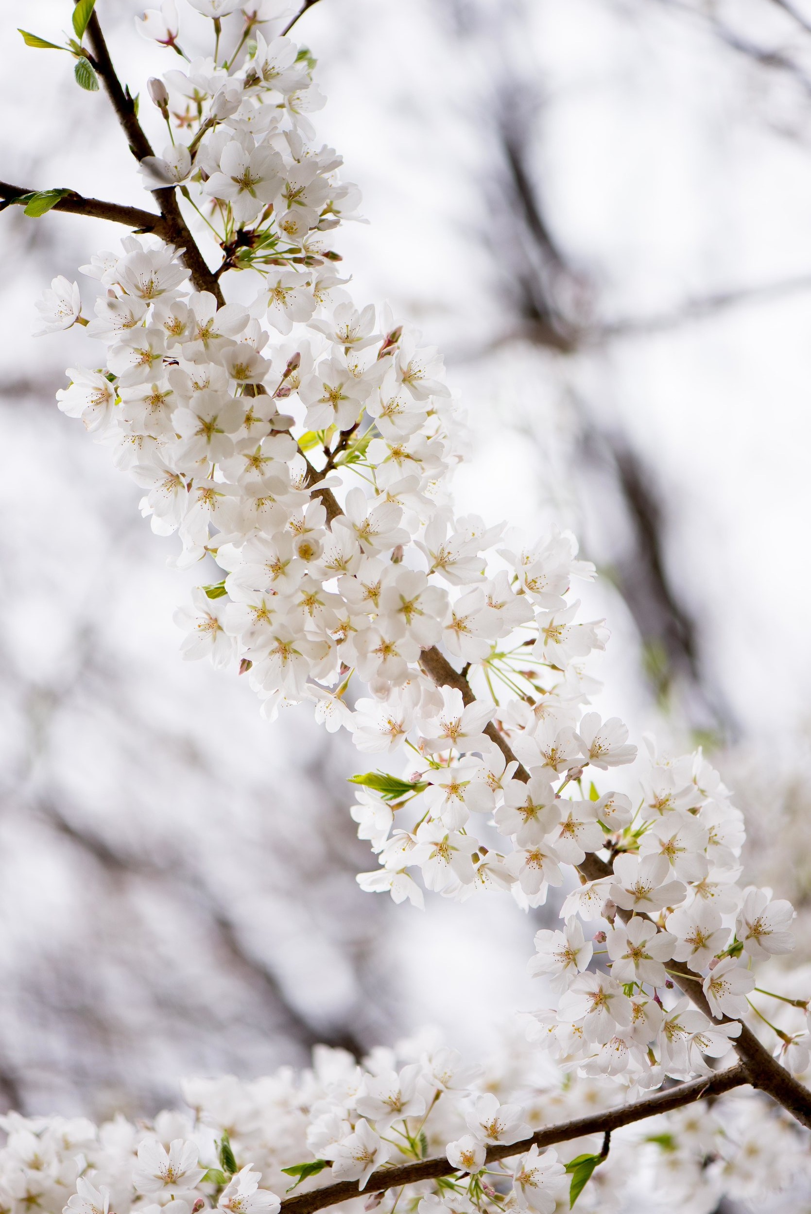 The+228+in+Sterling+Wedding+April+and+Brian