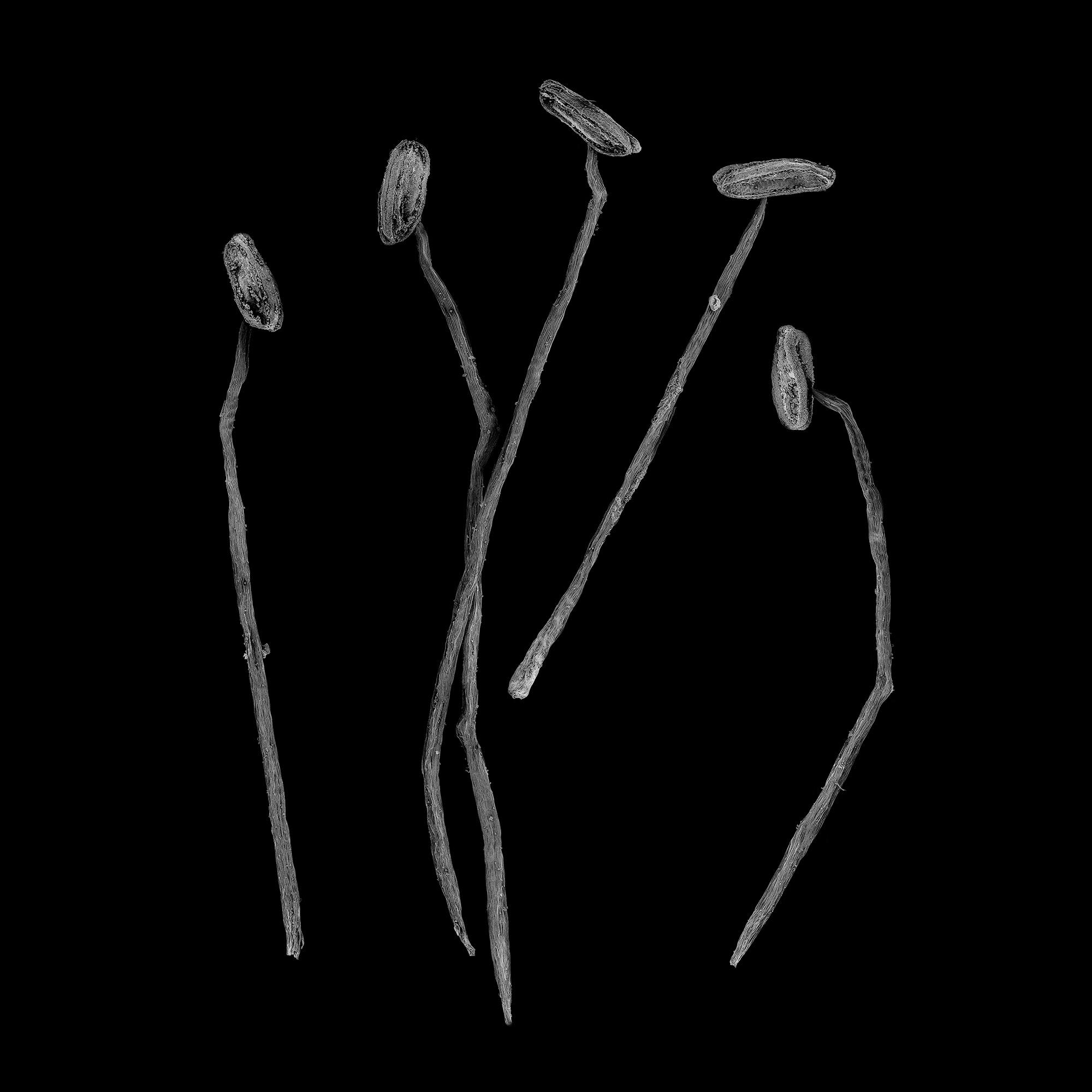 Elise_Gellweiler_Stamen_2017_50cmx50cm_Microscopy.jpg