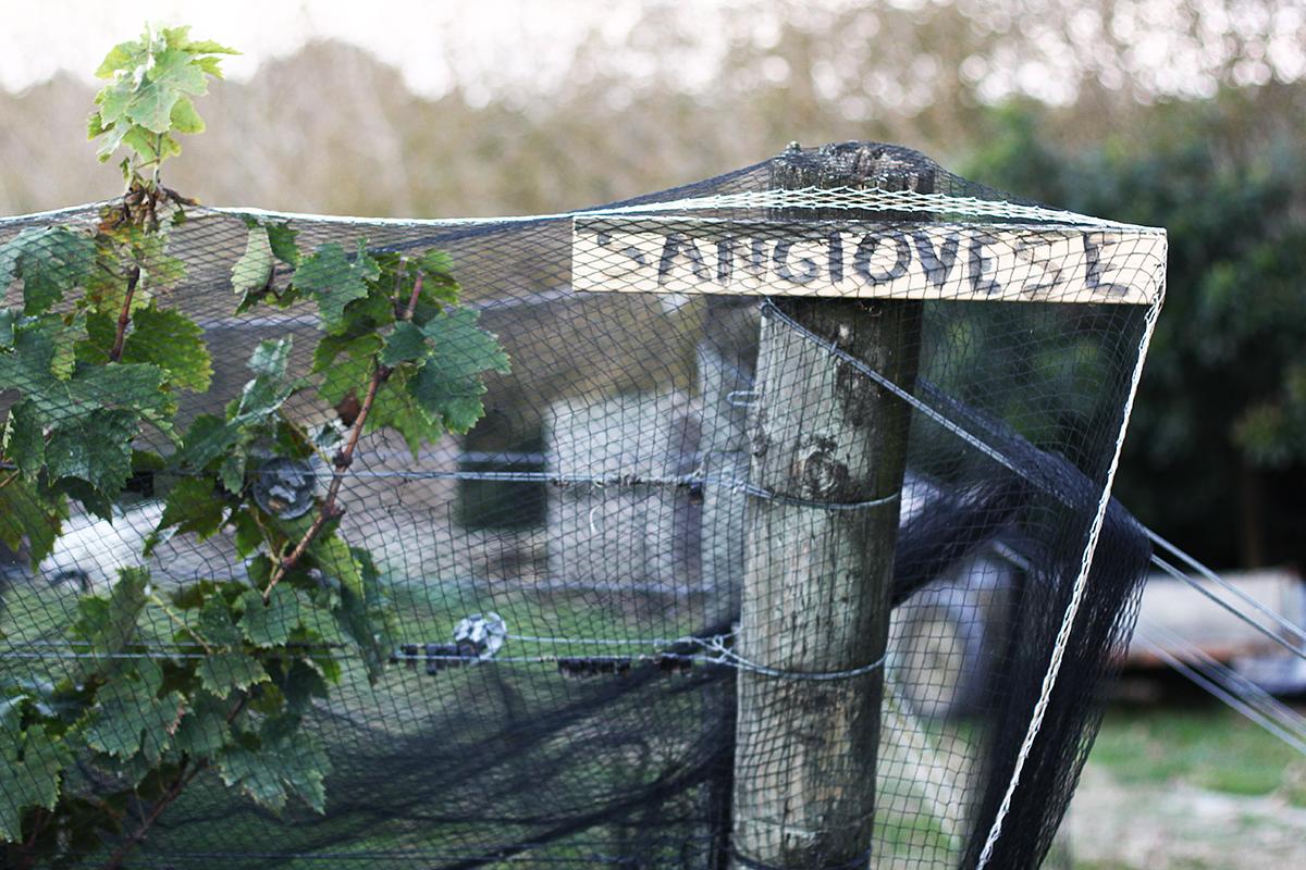 herons-flight-sangiovese.jpg