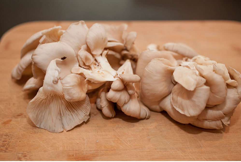 This is what a bunch of oyster mushrooms looks like.