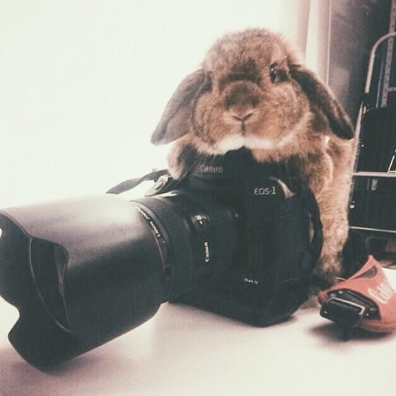 ferris-behind-the-camera-e1458867425430.jpg