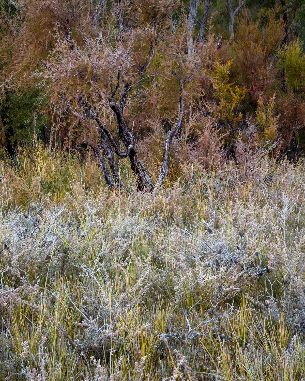 Frost, Gibralltar Range National Park [NEW02]