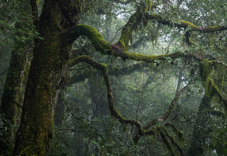Gondwana Rainforest {NEW26]