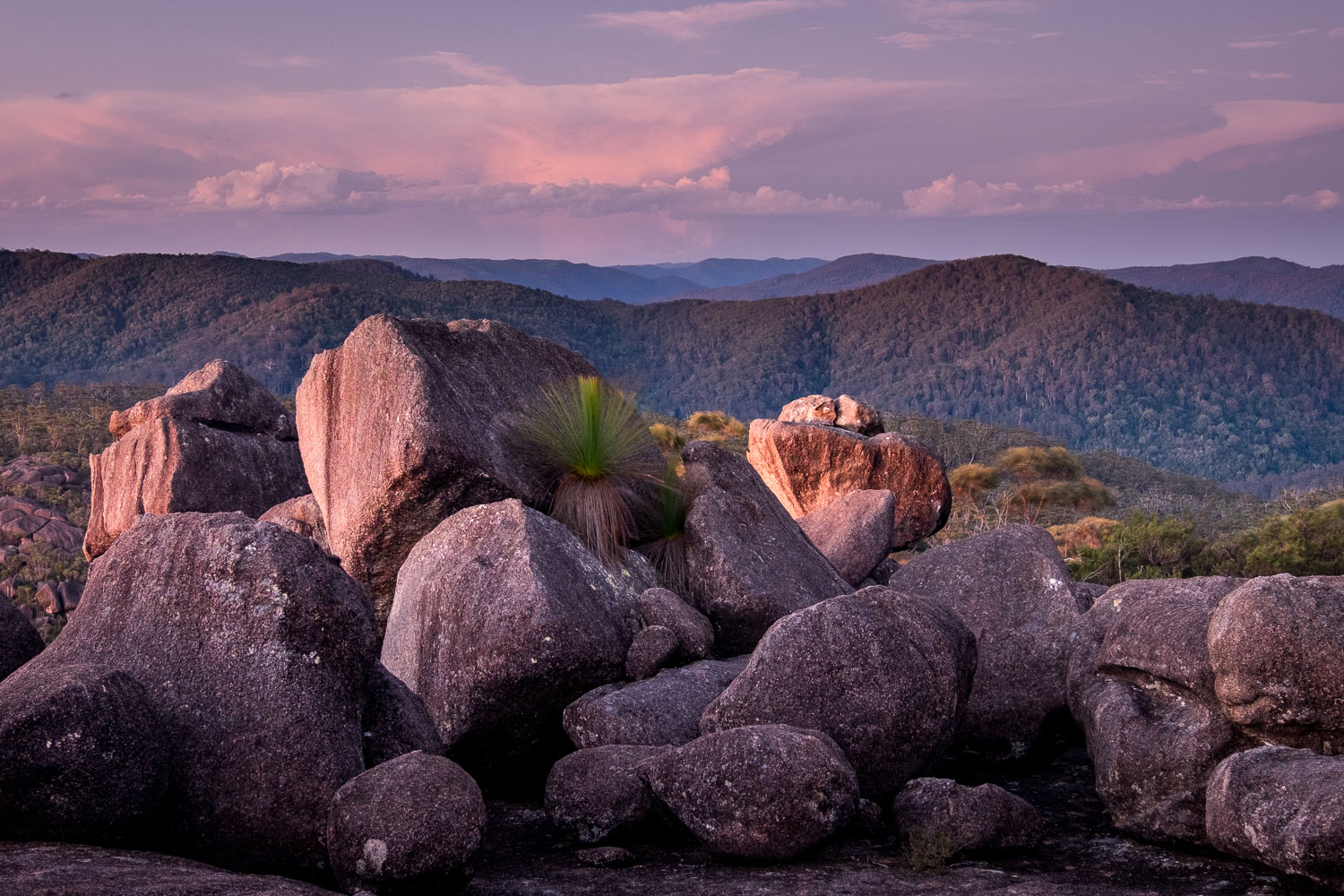 Unknown Granite Outcrop, Washpool National Park [NEW09]