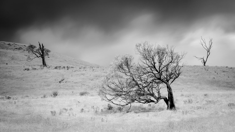 Windswept [NEW28]
