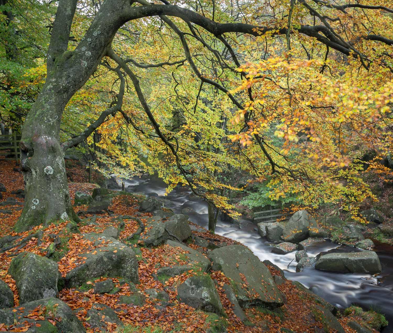 Padley Gorge, Derbyshire [EW07]