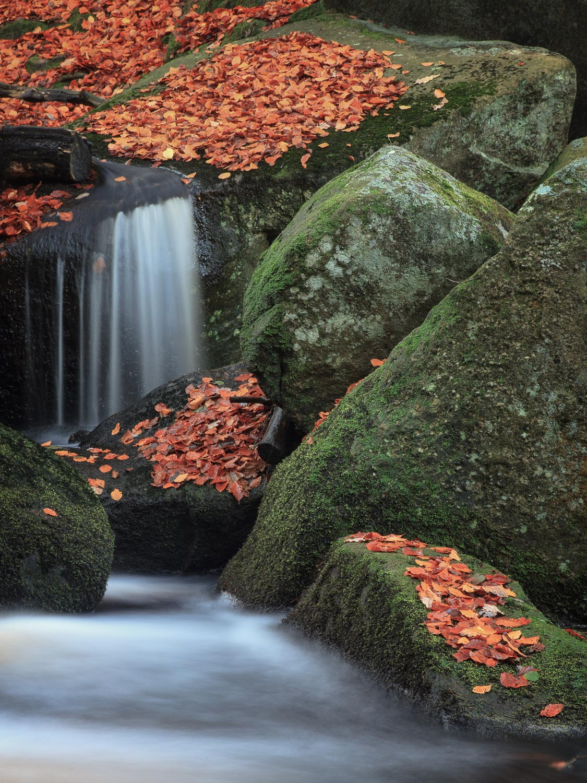 Padley Gorge, Derbyshire [EW17]