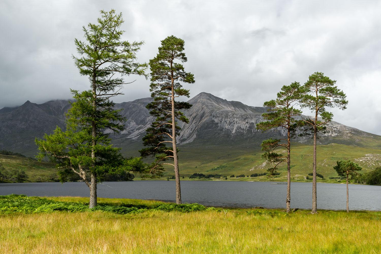 Four Pines & Beinn Eighe, Wester Ross [SCO31]