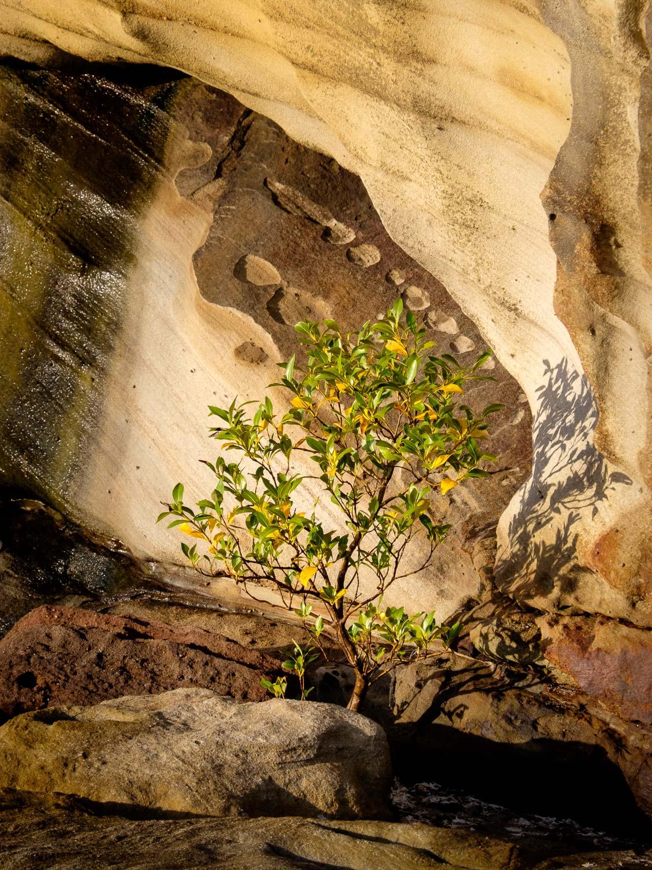 Shelley Head, Yuraygir National Park [YUR14]