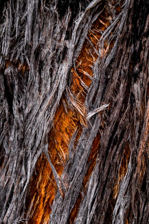 Tree bark scar, Girraween NP [GIR22]