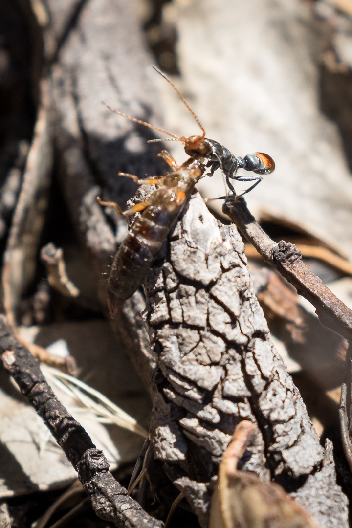 Hugeeeee ant