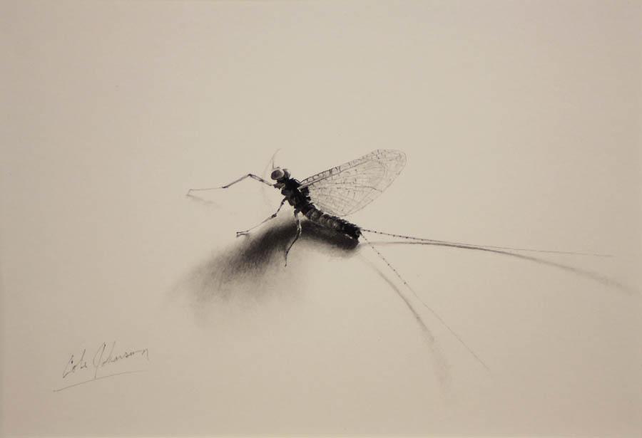e Mayfly Spinner Study.jpg