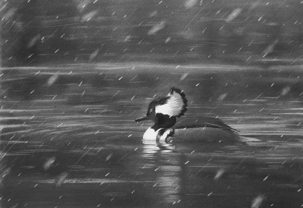 e Spring Snow.jpg