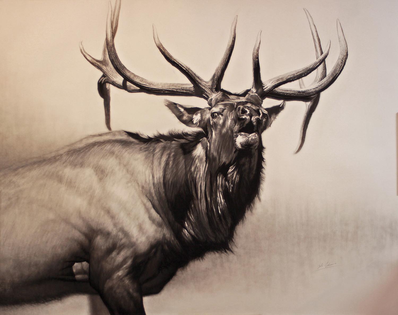 e Herd Bull    final.jpg