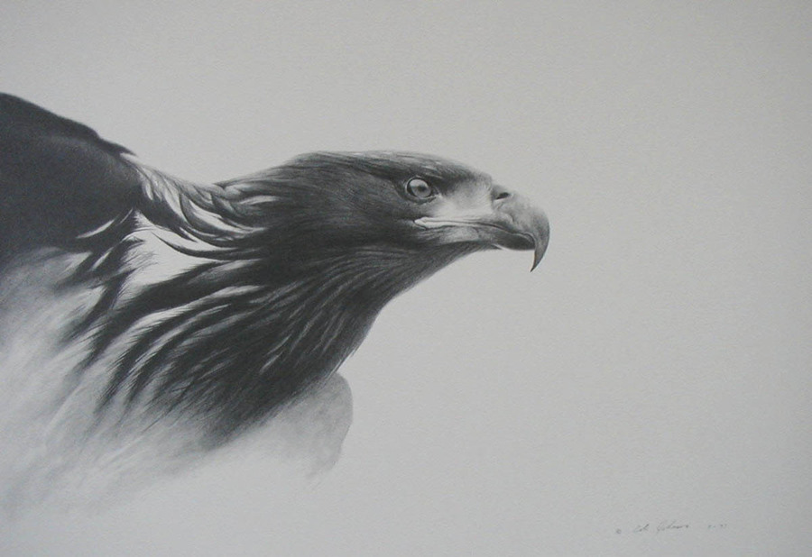 Young Eagle.jpg