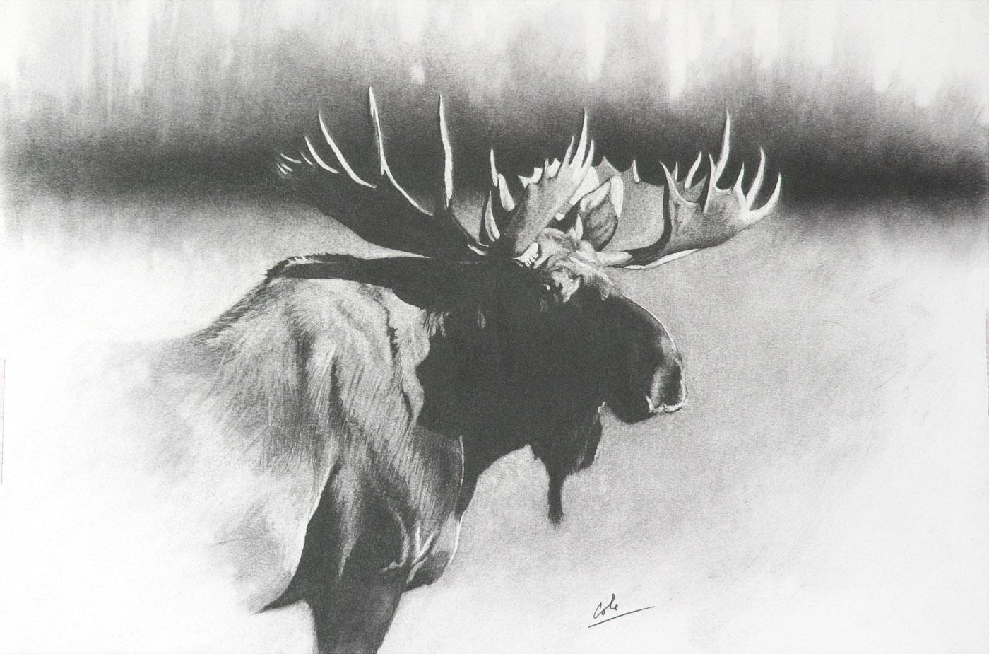 e Bull Moose 3.jpg