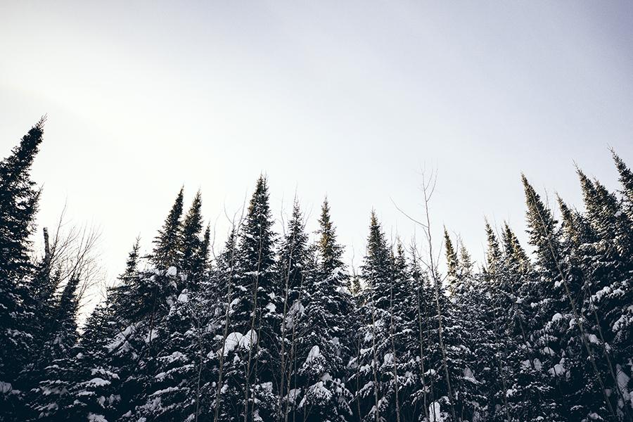 gfl_winter-448.jpg