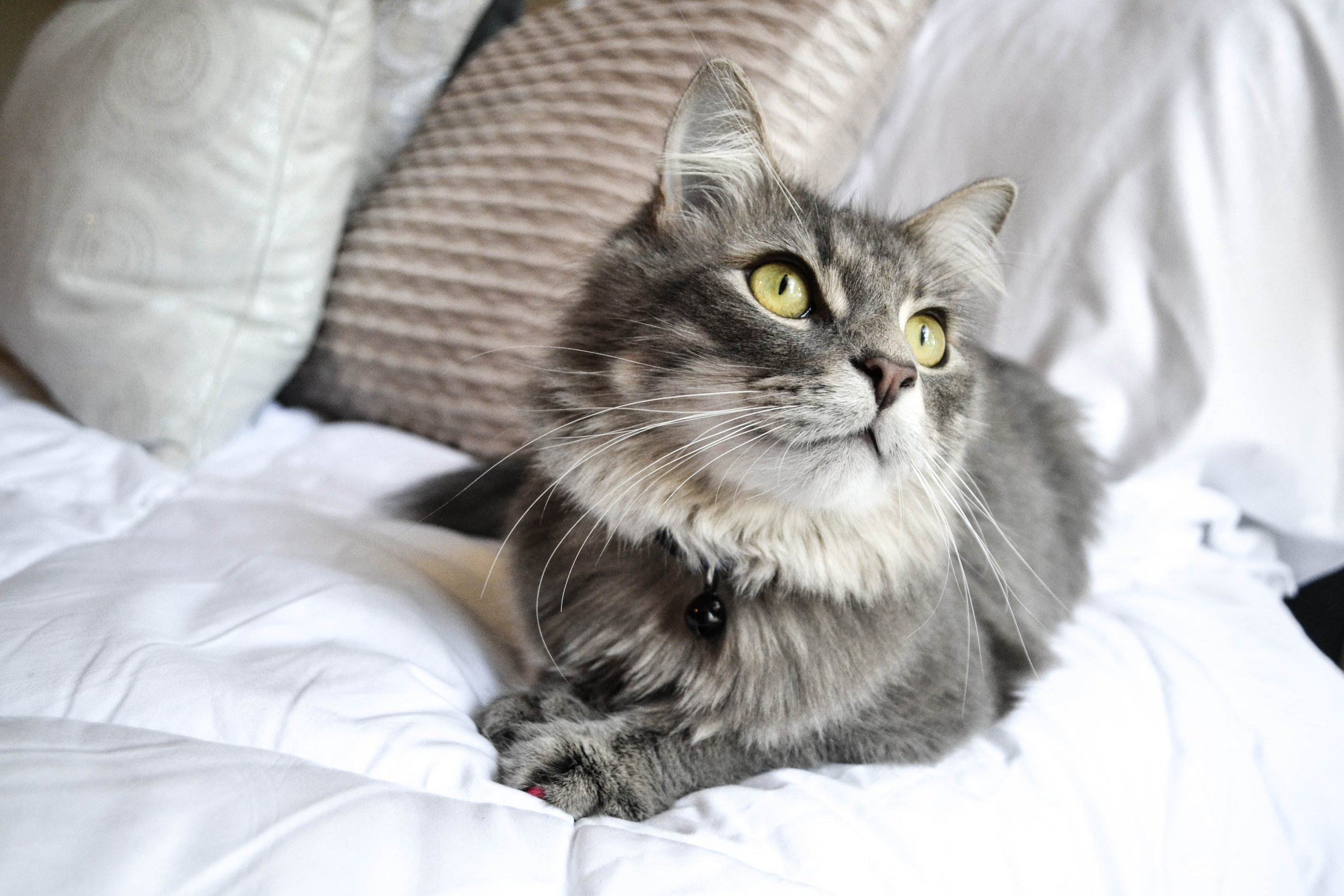Recently adopted FUR cats and their stories