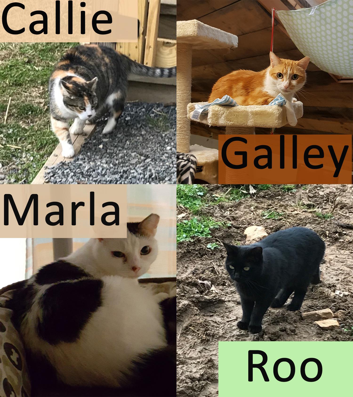 Callie Family.jpg