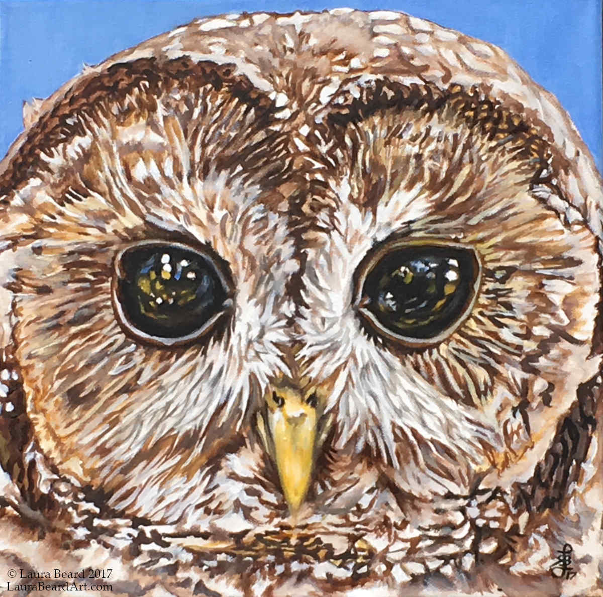 """Northern Spotted Owl"""