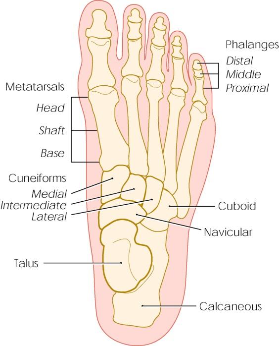 15841-stress-fractures.jpg