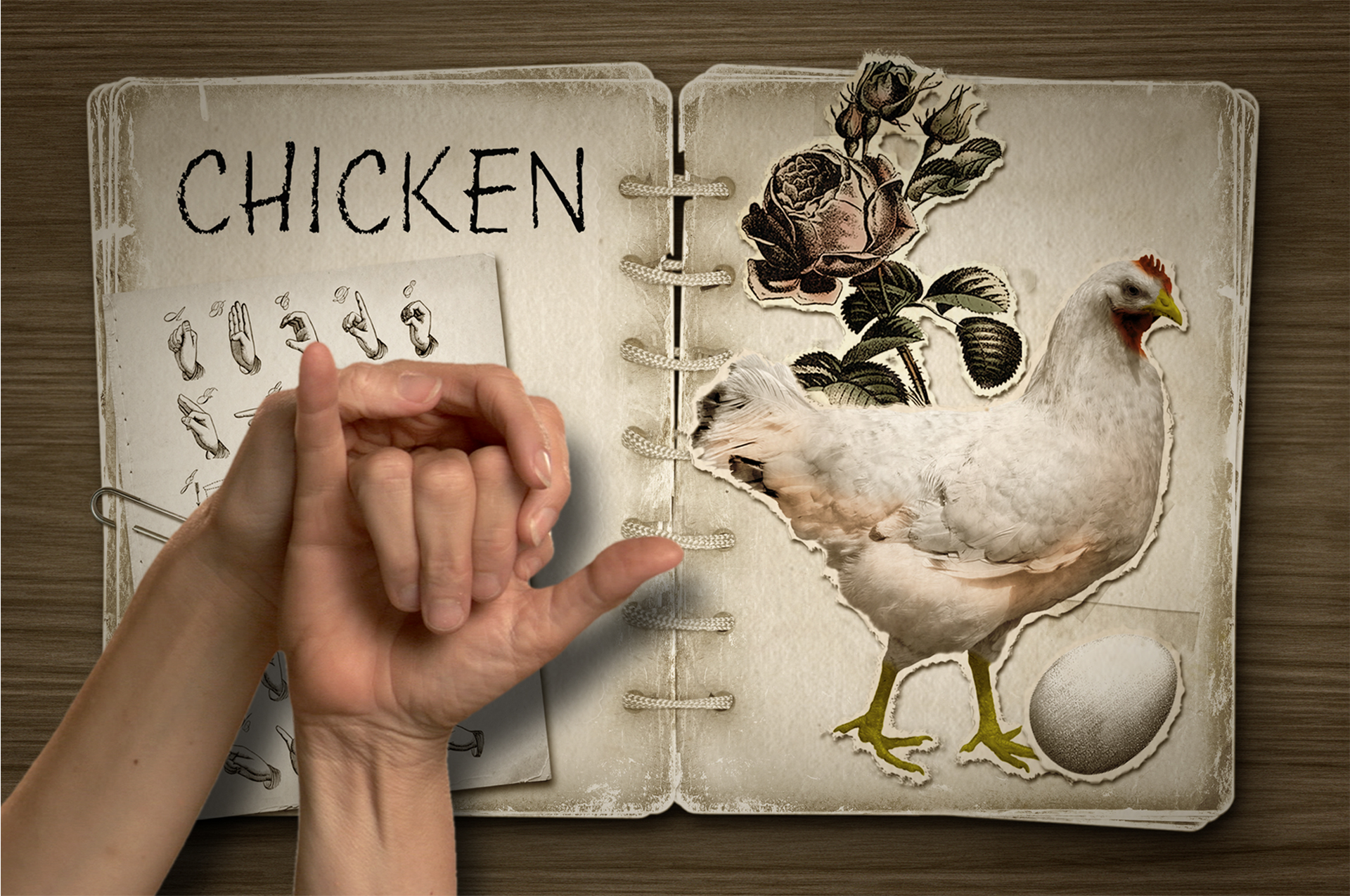 """This is an early mock up for how to include the tactile manual alphabet in an on screen animation.  Open book with the word CHICKEN on the left page, a color drawing of a chicken on the right, and above the book, human hands demonstrating the manual sign for """"chicken""""."""