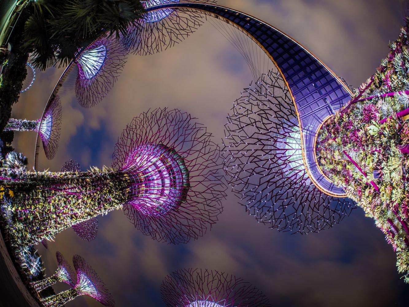 LDKphoto-SINGAPORE-SUPERTREE-007.jpg