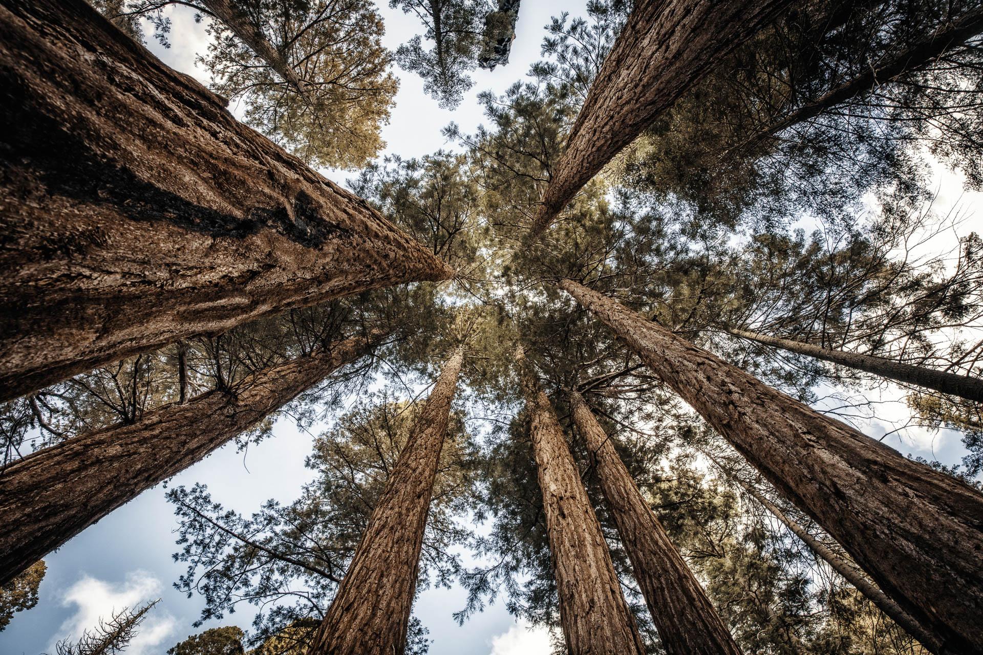 LDKphoto - Sequoia -2.jpg