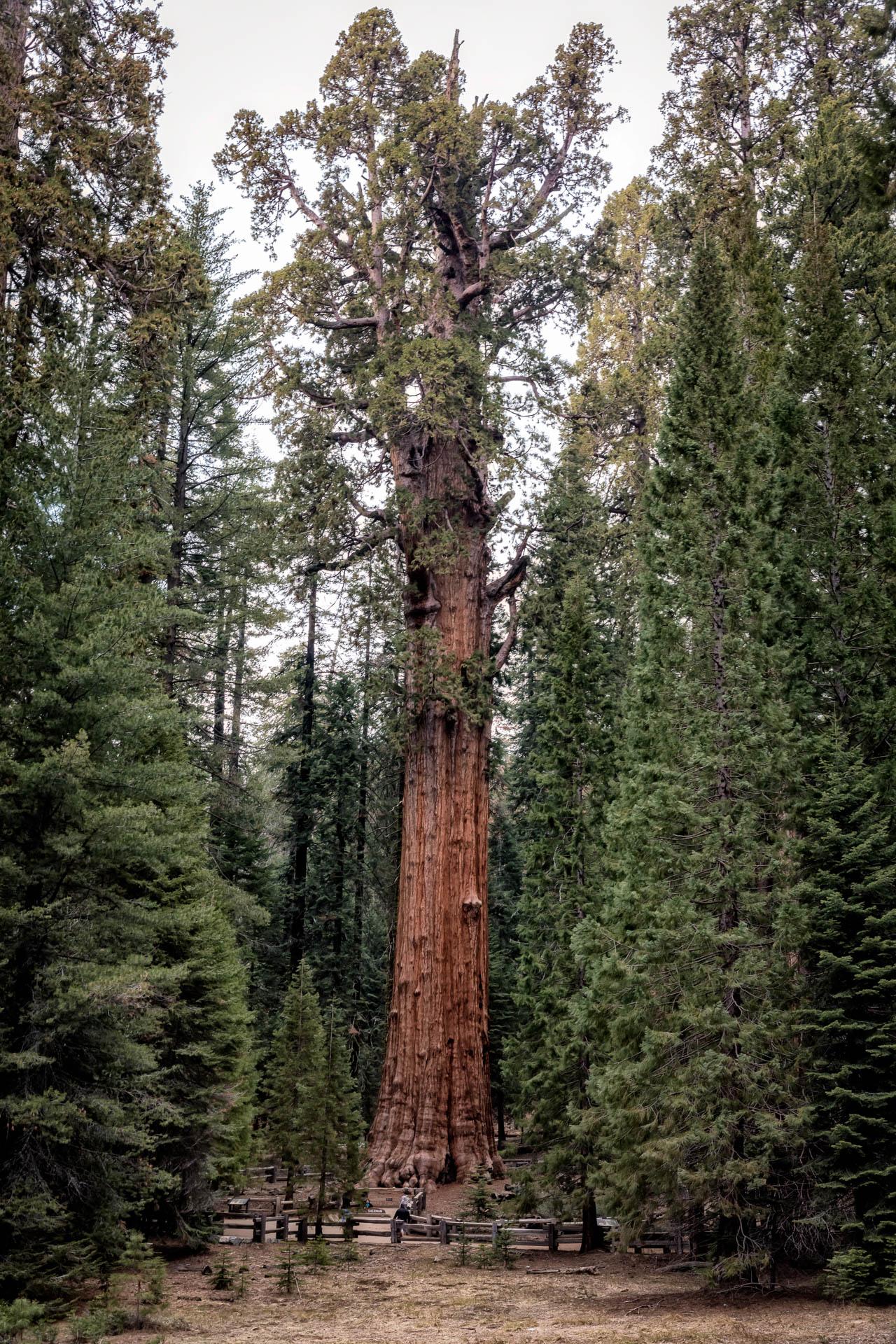 LDKphoto - Sequoia -5.jpg