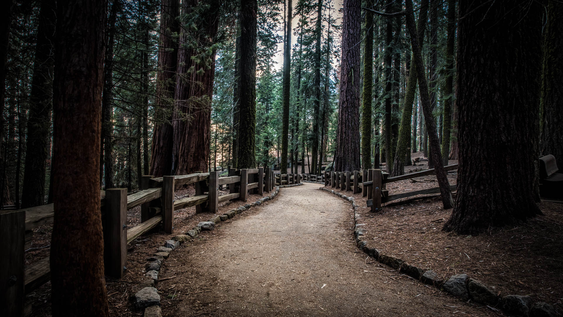 LDKphoto - Sequoia -6.jpg