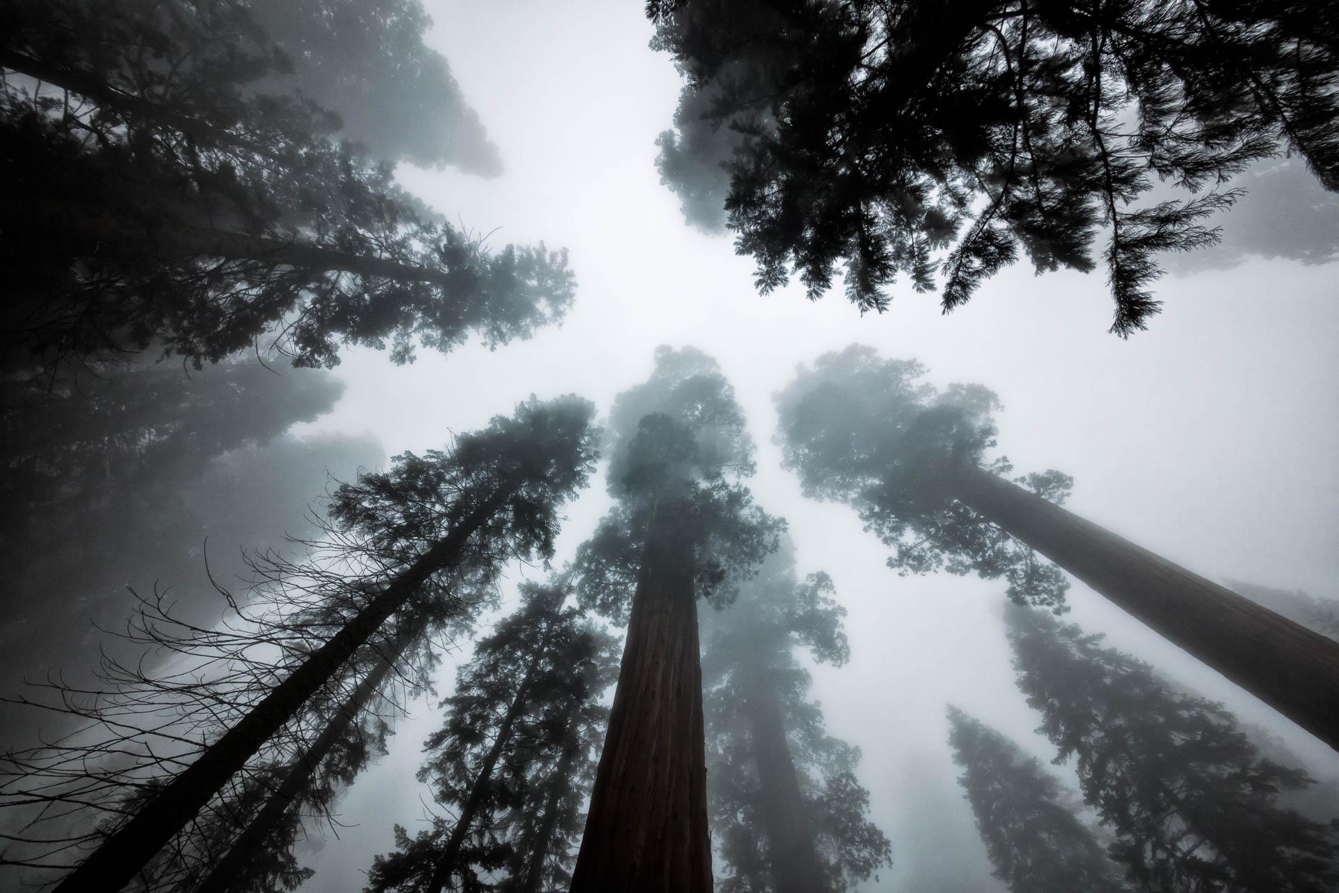LDKphoto - Sequoia -8.jpg