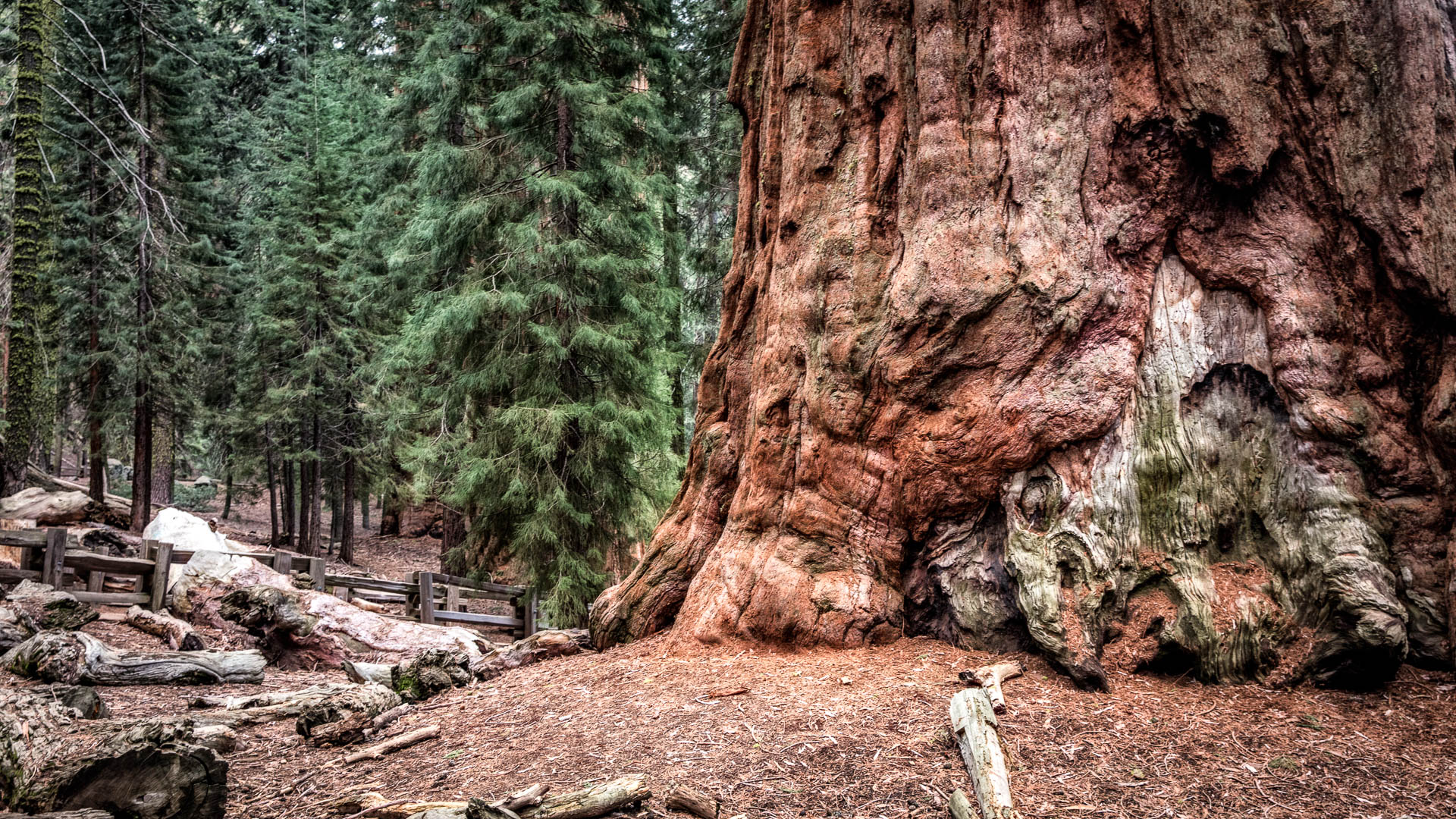 LDKphoto - Sequoia -7.jpg