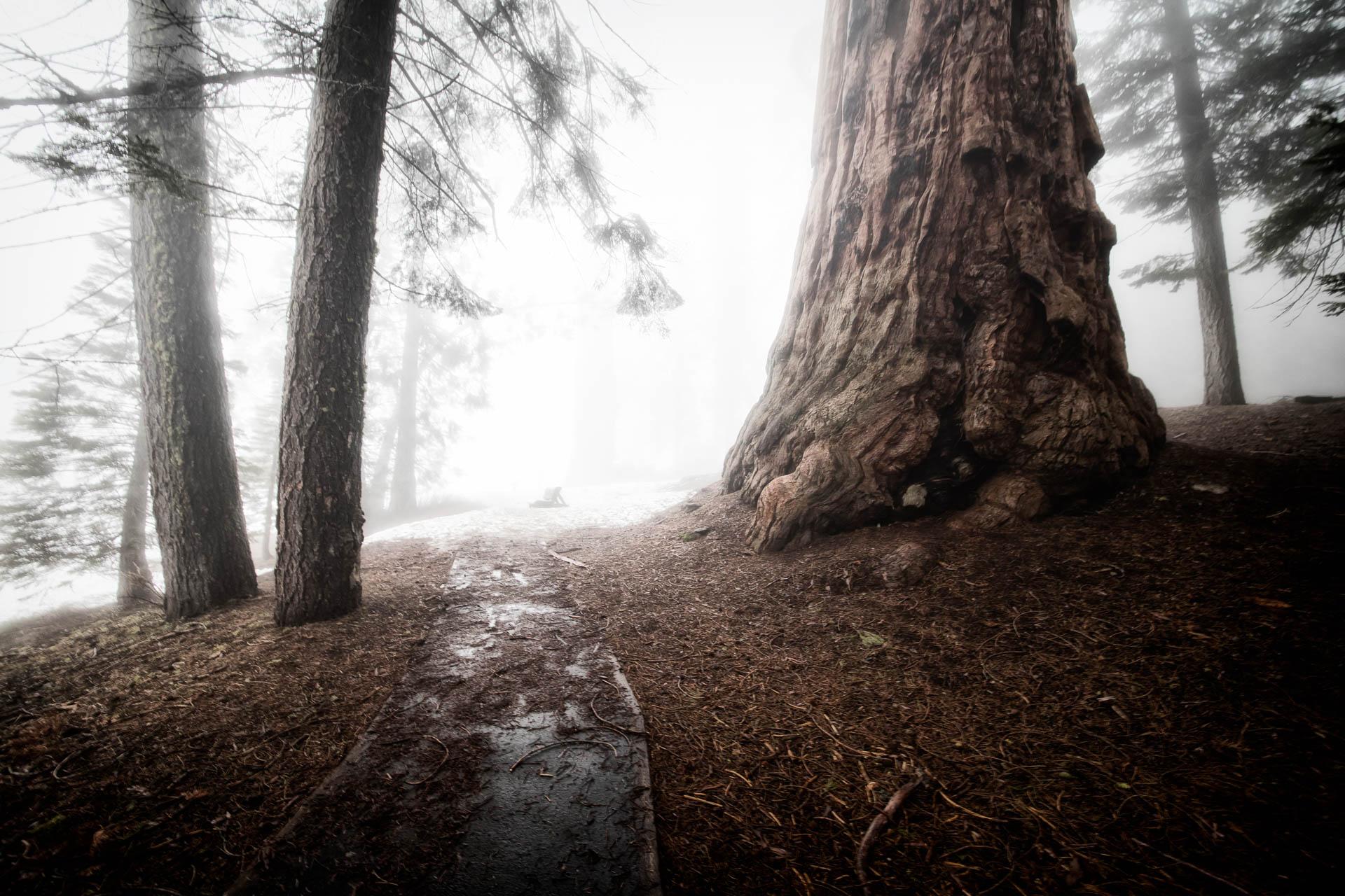 LDKphoto - Sequoia -9.jpg