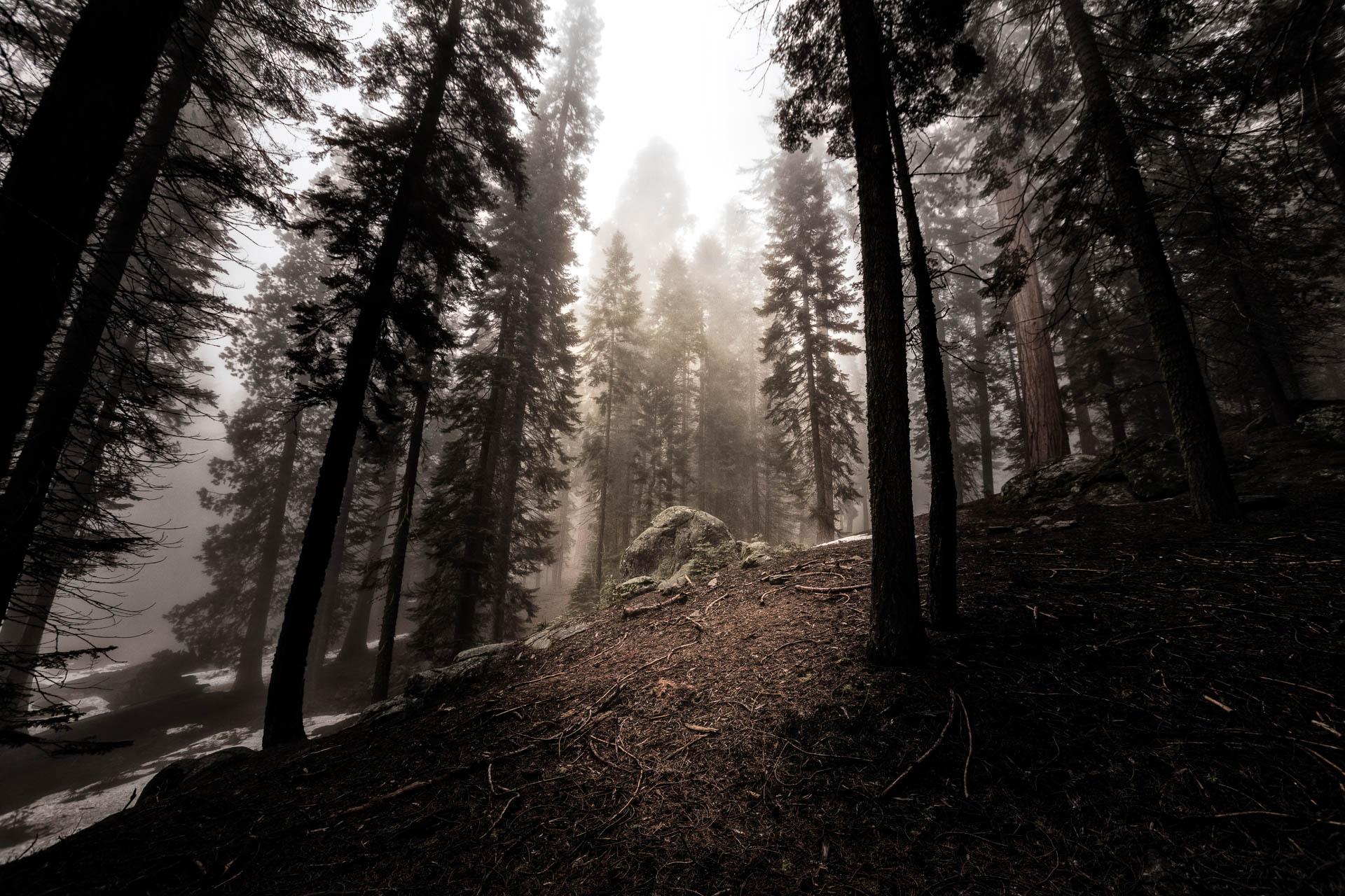 LDKphoto - Sequoia -12.jpg