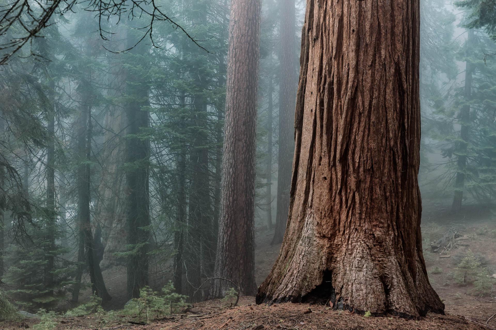 LDKphoto - Sequoia -14.jpg